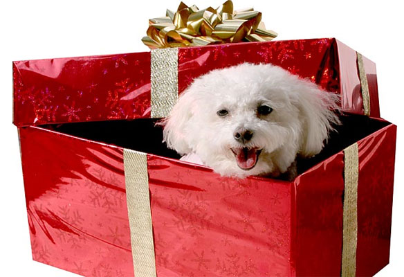 regalos de mascotas