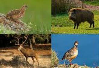Carnes de caza